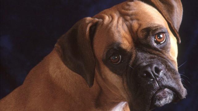 Il traîne son chien accroché à sa voiture sur 6 kilomètres