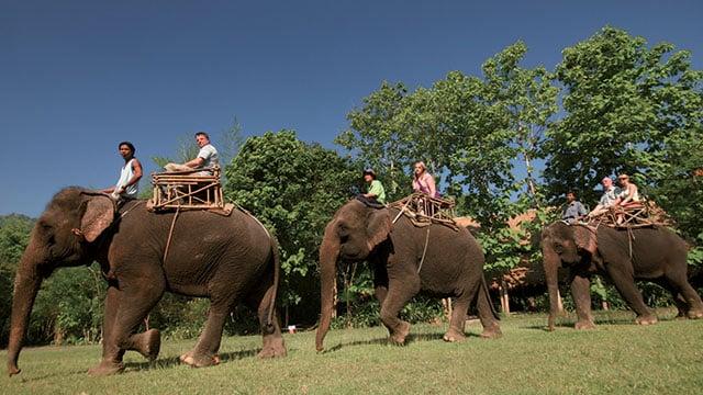 Un éléphant écrase un touriste et lui plante une défense dans la poitrine