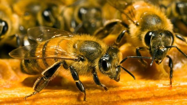 Invasion: des milliers d'abeilles attaque une bijouterie à Montpellier !