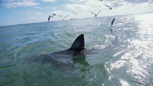 Un requin de 3 mètres a été filmé près d'une plage britannique !