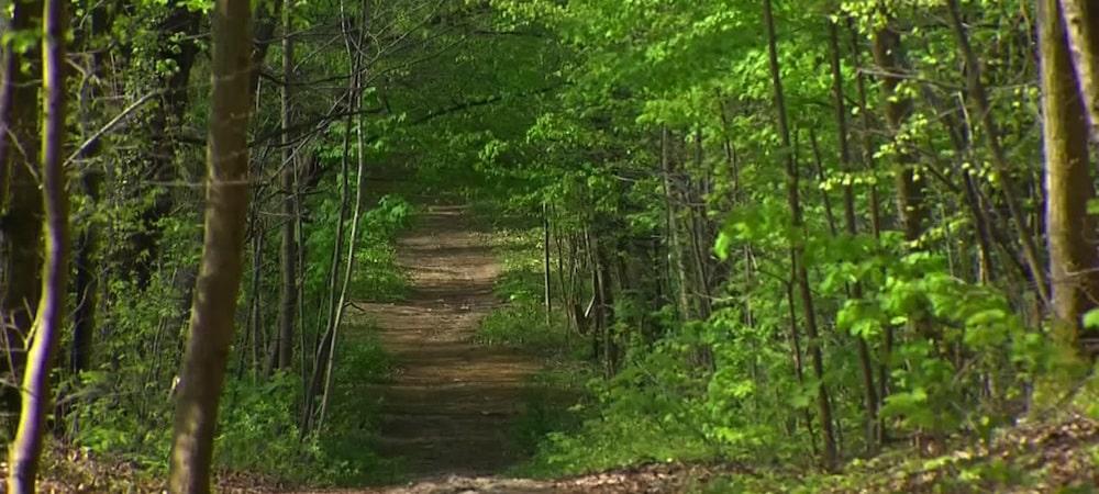 Hauts-de-Seine: une femme promenait en laisse un homme nu en pleine forêt