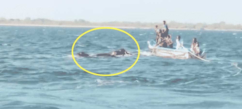 1000Animaux des marins sauvent deux éléphants qui se noient dans l'océan