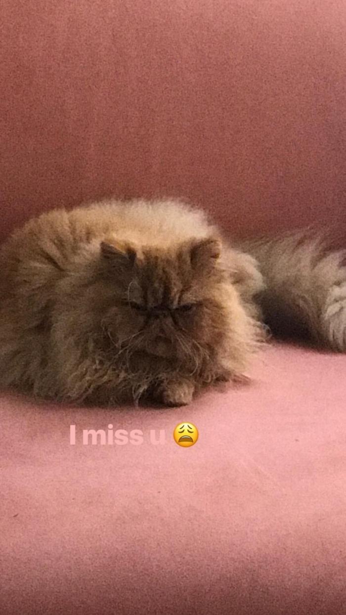 Lily-Rose Depp loin de son chat: elle lui fait une belle déclaration sur Instagram !