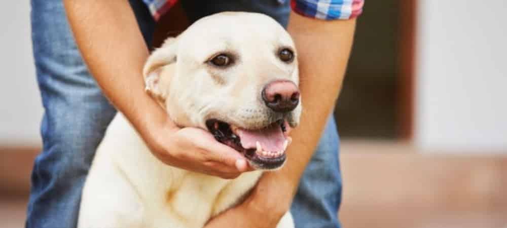 Job de rêve: Être payé pour caresser d'adorables chiens !