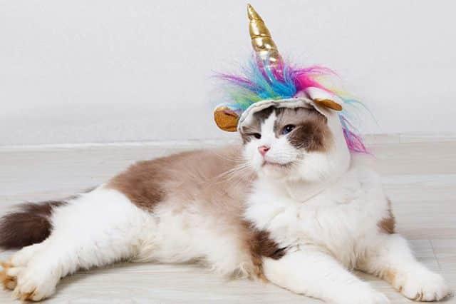 12 Après l'avoir transformé en lion, vous pouvez aussi le faire devenir une petite licorne trop mignonne