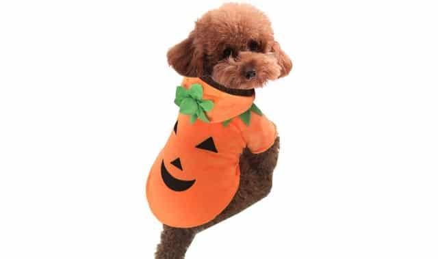 24 Ne cherchez plus, vous venez de trouver le déguisement Halloween pour votre minou ou votre minette