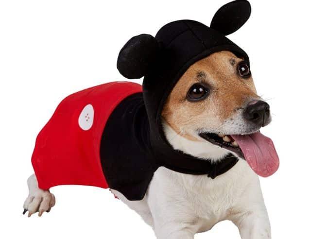 4 Pour une occasion spéciale ou juste pour le fun, vous pouvez déguiser votre chien en Mickey