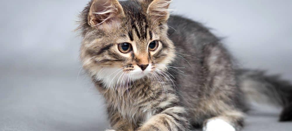 Chat, chaton 20 cadeaux WTF à se faire offrir pour le rendre trop cool !