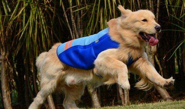 17 Pensez aussi à votre chien pendant la canicule. Il a aussi le droit de se rafraîchir un peu