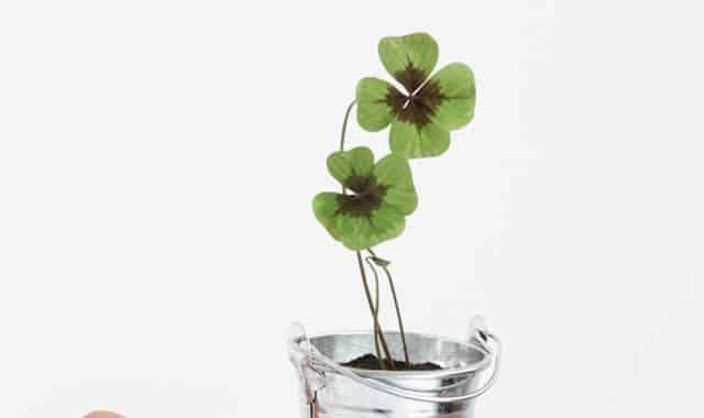 20 Donnez un peu de chance à votre meilleur pote, ça lui sera bien utile dans sa vie