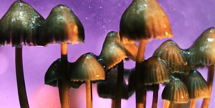 Drogue: Oakland dépénalise les champignons hallucinogènes !