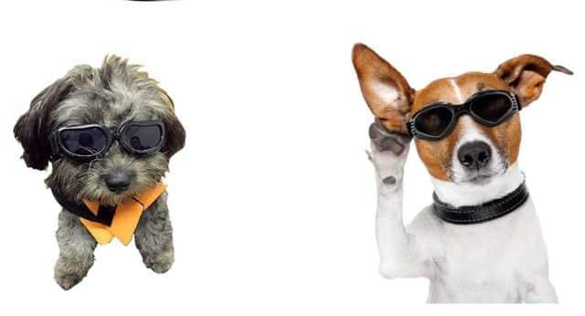 13 Votre chien ou votre chat ont aussi droit à une paire de lunettes de soleil pour cet été