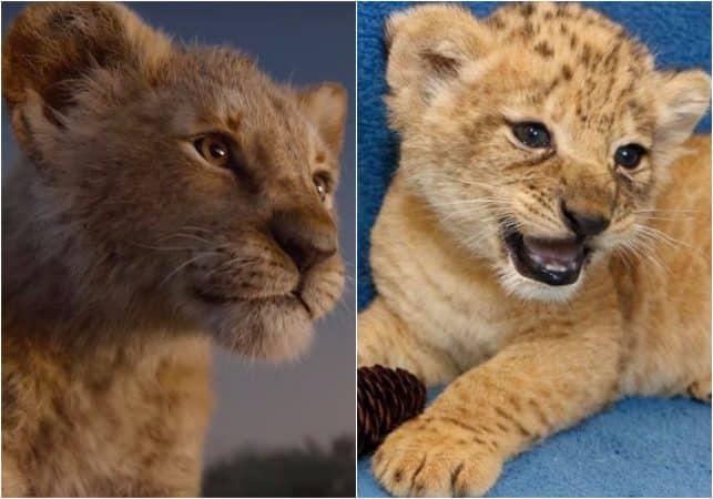 Le Roi Lion: découvrez Bahati, le lionceau filmé pour créer Simba !