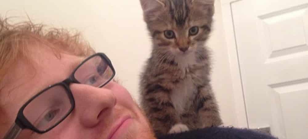 Ed Sheeran en deuil: son chat décède suite à un accident brutal !