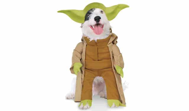 14 Et si vous transformiez votre petit chien en Yoda. Vos amis n'auront plus le même regard sur lui