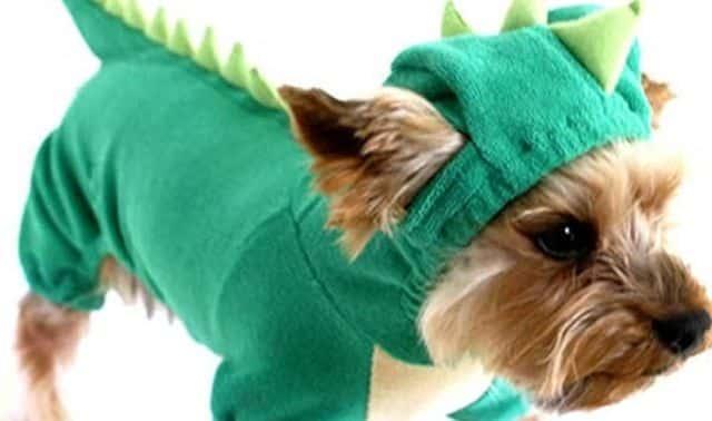 17 Pour cette soirée deguisee votre chien adore va se transformer en dinosaure Vous n allez pas le reconnaitre