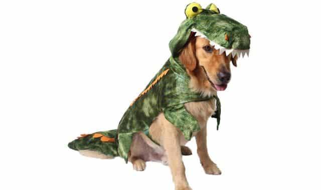 18 Après le dinosaure, vous pouvez aussi déguiser votre chien en crocodile. Ne laissez rien traîner, sinon il va le dévorer