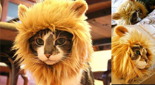 2 Et si votre chat préféré devenait un vrai fauve le temps d'une soirée d'Halloween