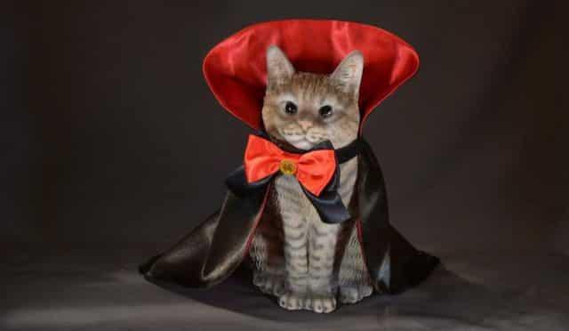 20 Attention à votre chat Dracula. Il va tous vous transformer en vampire le soir d'Halloween