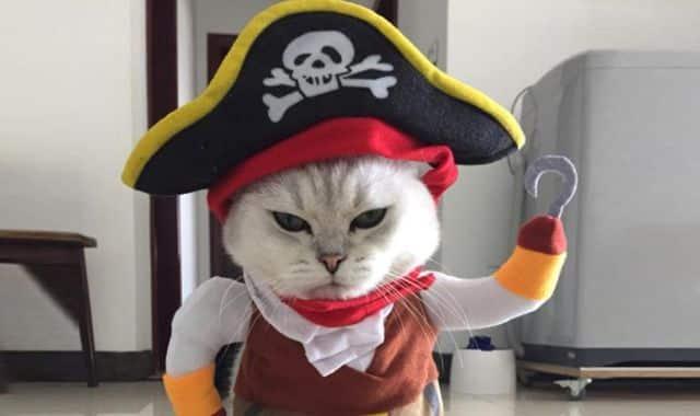 21 Vos animaux ont aussi droit à un déguisement pour Halloween