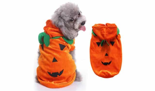 4 Votre chien peut aussi être déguisé en citrouille pour Halloween. Il va vraiment être trop mignon