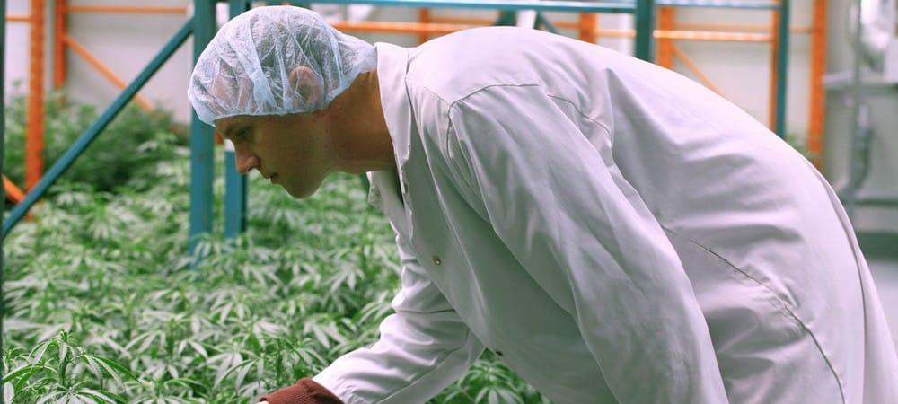 Cannabis thérapeutique: son expérimentation enfin autorisée en France !
