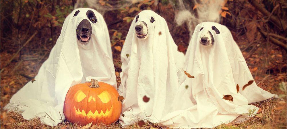 Halloween 30 déguisements pour terroriser tes amis grande