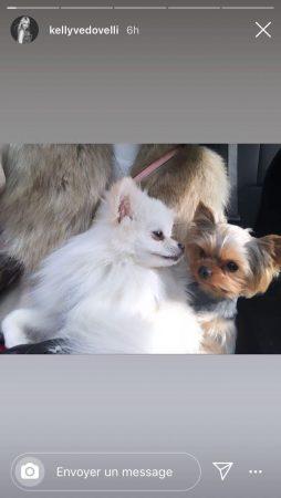 Kelly Vedovelli amoureuse des animaux: elle pose avec ses deux petits chiens !