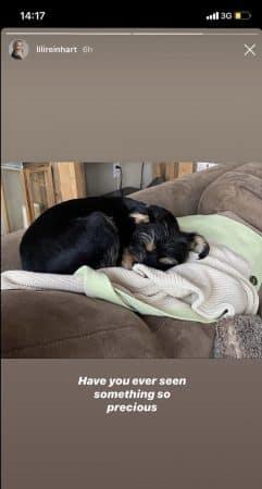 Cole Sprouse: sa chérie Lili Reinhart sous le charme de son chien !