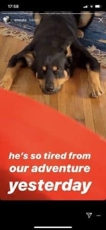 Emily Ratajkowski- son chien Colombo la fait toujours autant craquer 640