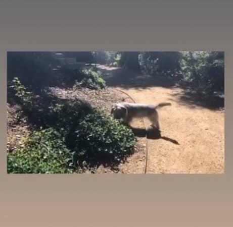 Jennifer Aniston dévoile son immense jardin qui a tout l'air d'une forêt !
