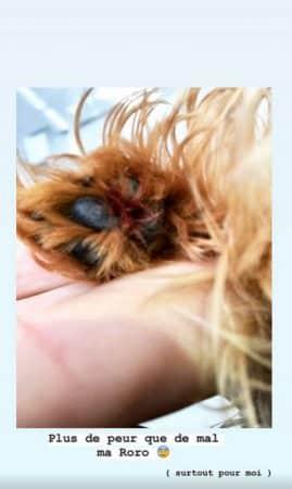 Kelly Vedovelli: sa petite chienne Rosie s'est blessée à la patte !
