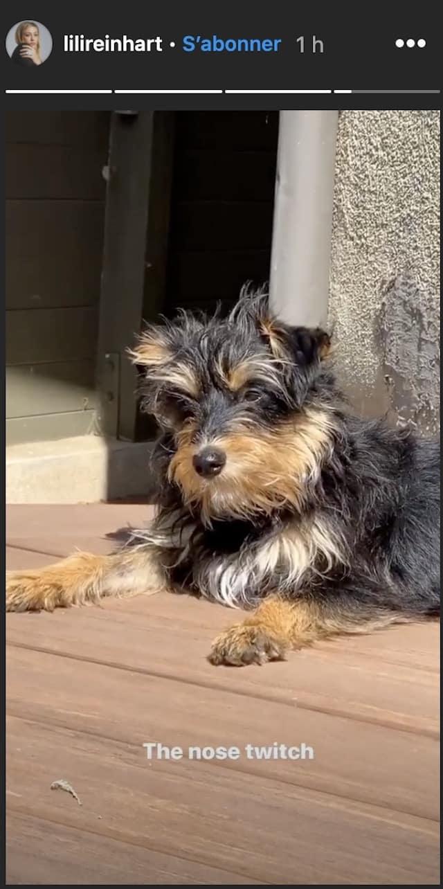Lili Reinhart ne lâche pas son petit chien pendant le confinement !