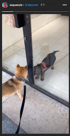 Squeezie se moque des chiens de ses voisins et c'est hilarant 640