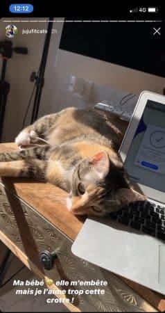 Juju Fitcats (Tibo InShape) son chat ne veut pas qu'elle travaille !