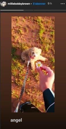 Millie Bobby Brown déclare son amour à son chien sur Instagram !