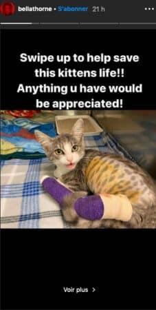 Bella Thorne prête à tout pour sauver la vie de chatons en détresse !