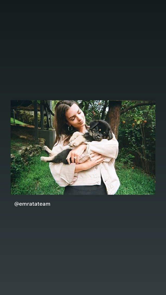 Emily Ratajkowski: cette photo adorable avec un chiot dans ses bras !