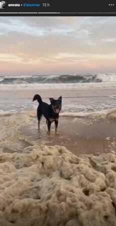 Emily Ratajkowski s'éclate en bord de mer avec son chien Colombo !