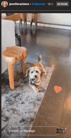 Jennifer Aniston est raide dingue de son adorable petit chien 01092020-