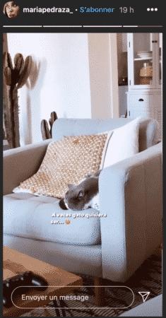 Le chat de Maria Pedraza est le plus heureux