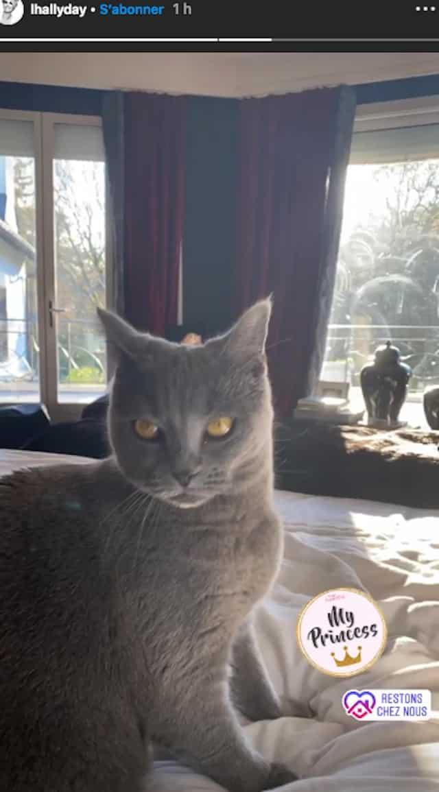 Laeticia Hallyday complètement gaga de son chat sur Instagram !