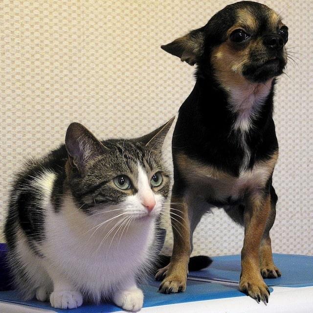 Animaux- la vente de chats et chiens bientôt interdite en animalerie
