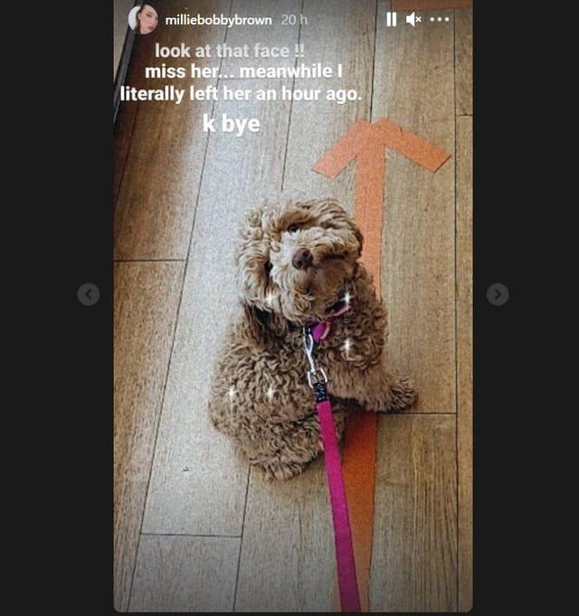 Millie Bobby Brown craque face à la bouille adorable de son chien !