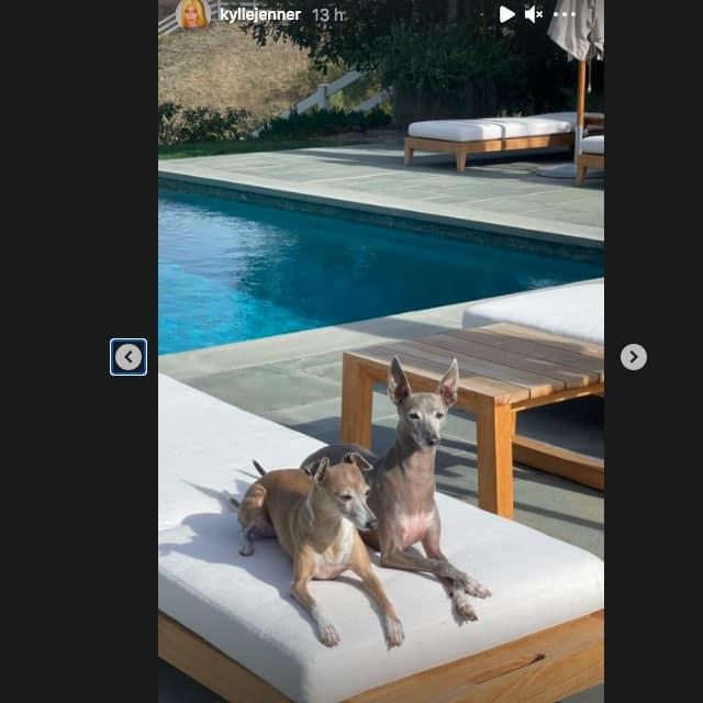 Kylie Jenner est une grosse fan des chiens et le prouve sur Instagram !