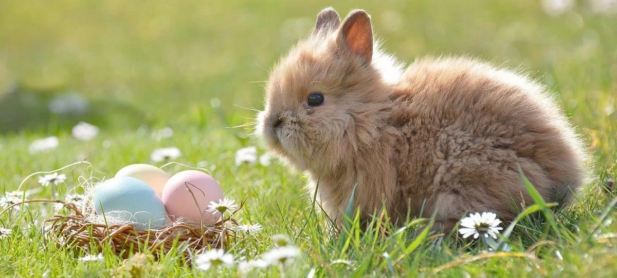 Pâques: tout ce qu'il faut savoir sur cette tradition printanière !