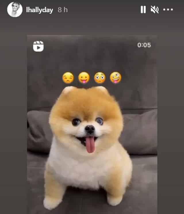 Laeticia Hallyday attendrie par cette vidéo craquante de bébé chien !