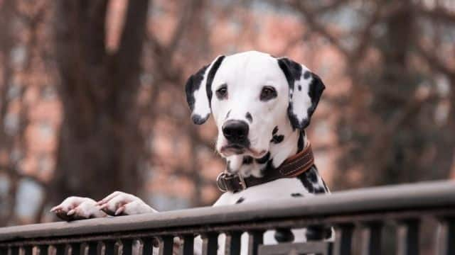 Astrologie: quel animal de compagnie adopter selon votre signe ?