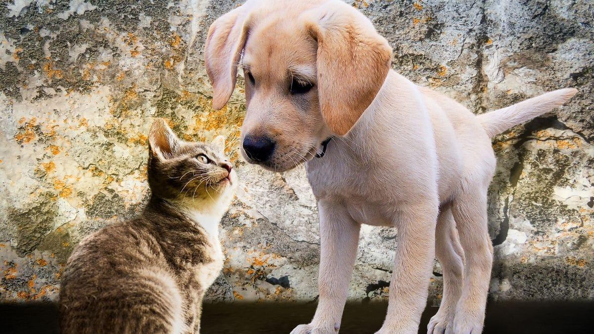 Astrologie Quel Animal De Compagnie Adopter Selon Votre Signe 1 1