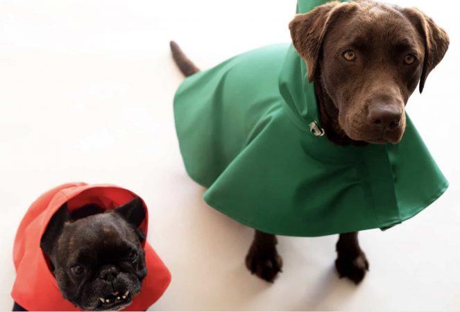 Zara lance une nouvelle ligne de vêtements pour animaux de compagnie !